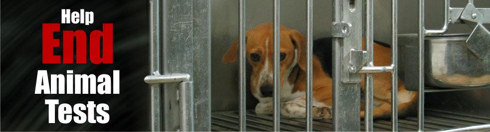 animal cruelty testing. makeup Animal testing! animal cruelty testing. testing and Animal cruelty