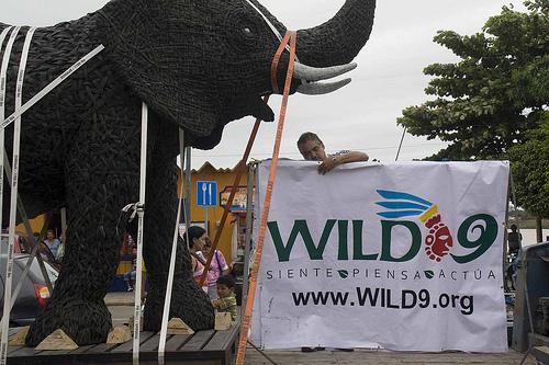 wild-09